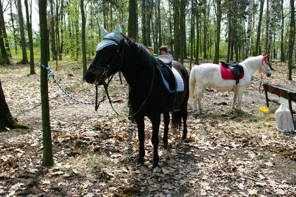 projížďky na koních.jpg