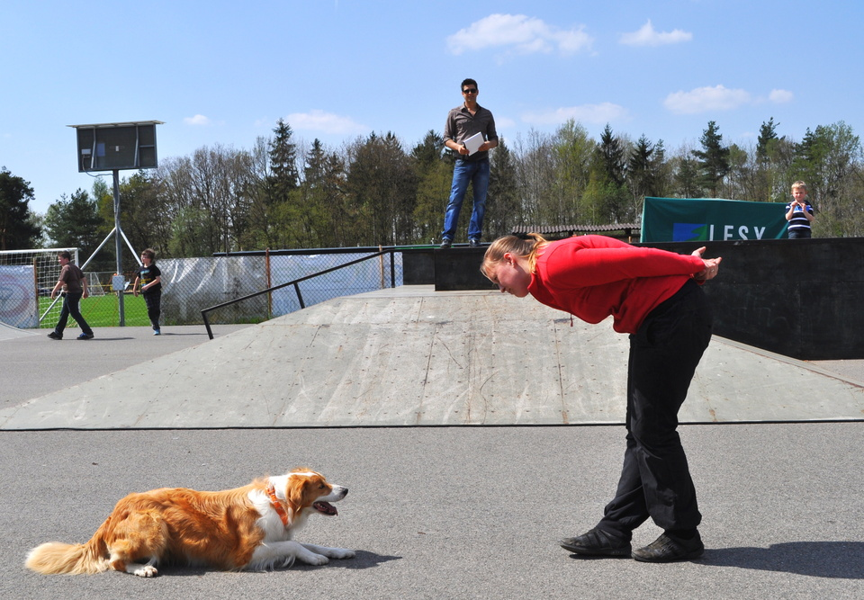 Dog dancing .jpg