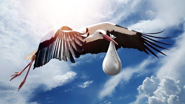 bird-3058712__340.jpg