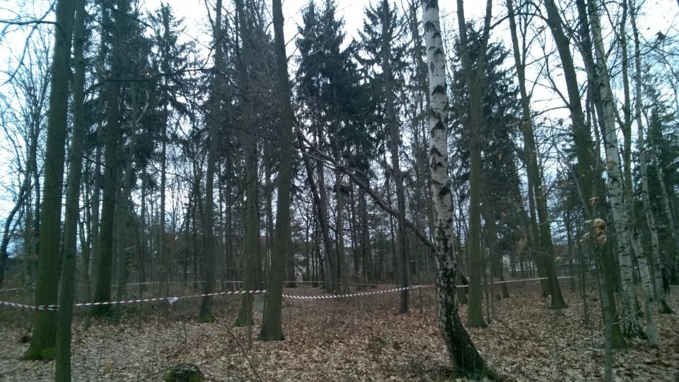 strom_Polesna.png