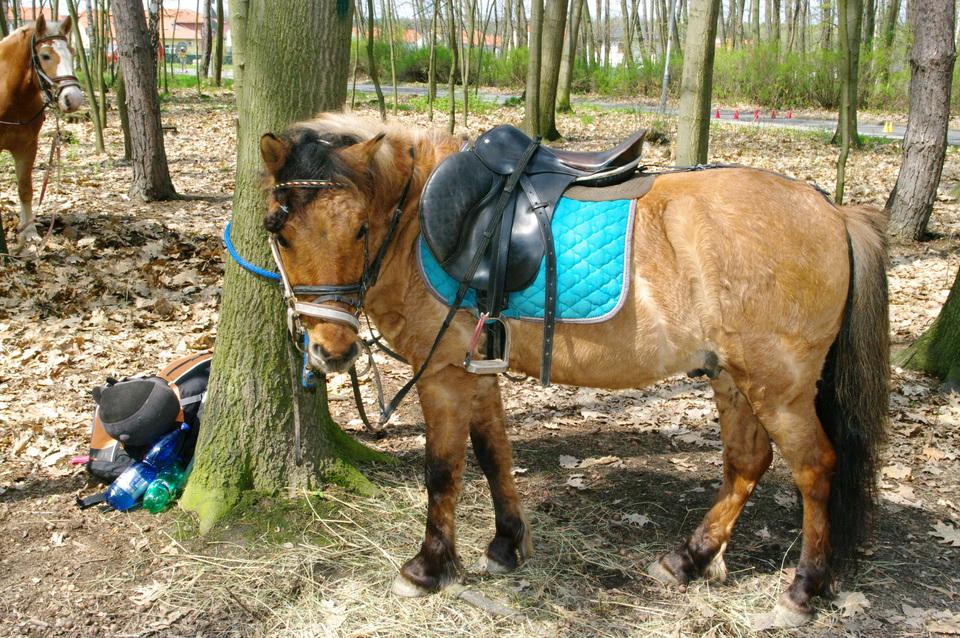 projížďky na koních (2).jpg